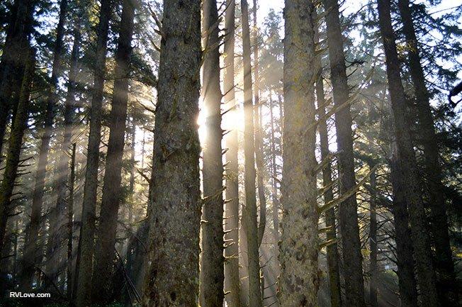 DSC_0071_sunstreamingtrees_rfw