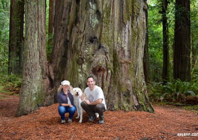 Family photo in the redwood forest