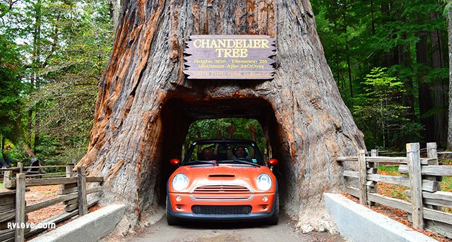 Chandelier Drive-Thru Tree
