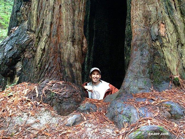 Marc inside a redwood