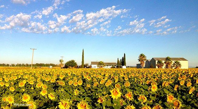 IMG_7353_sunflowerhousesky_larger_rfw
